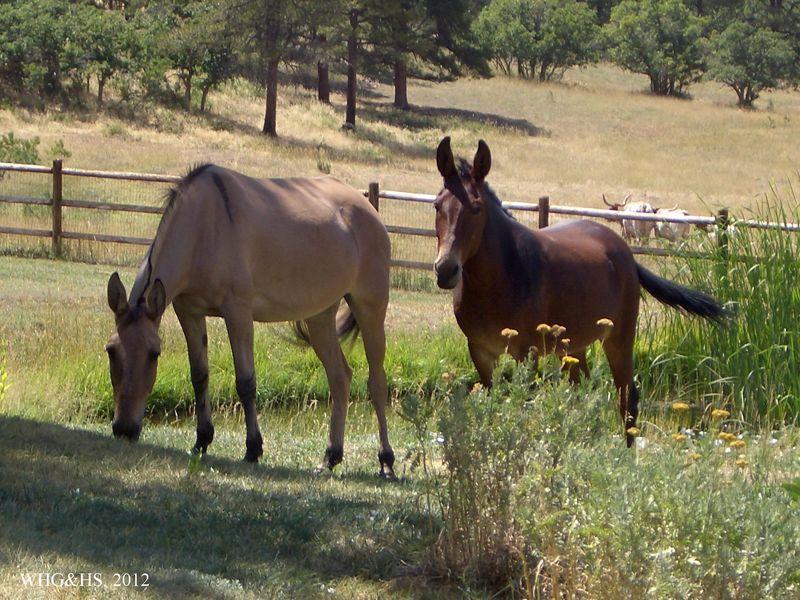Hamilton Ranch 2012 010