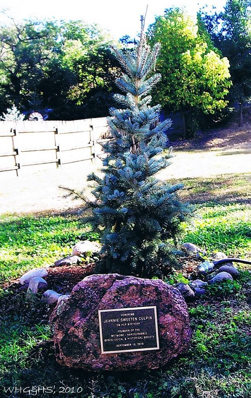 History Center Jeannie Culpin Blue Spruce
